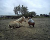 paardencoach
