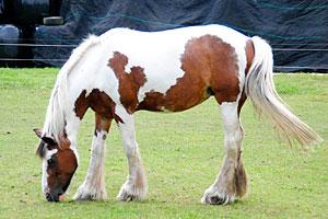 Paarden Frederiekje