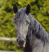 Paarden Maeike