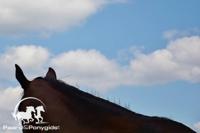 Meerdere paarden met brandwonden na brand in Sittard