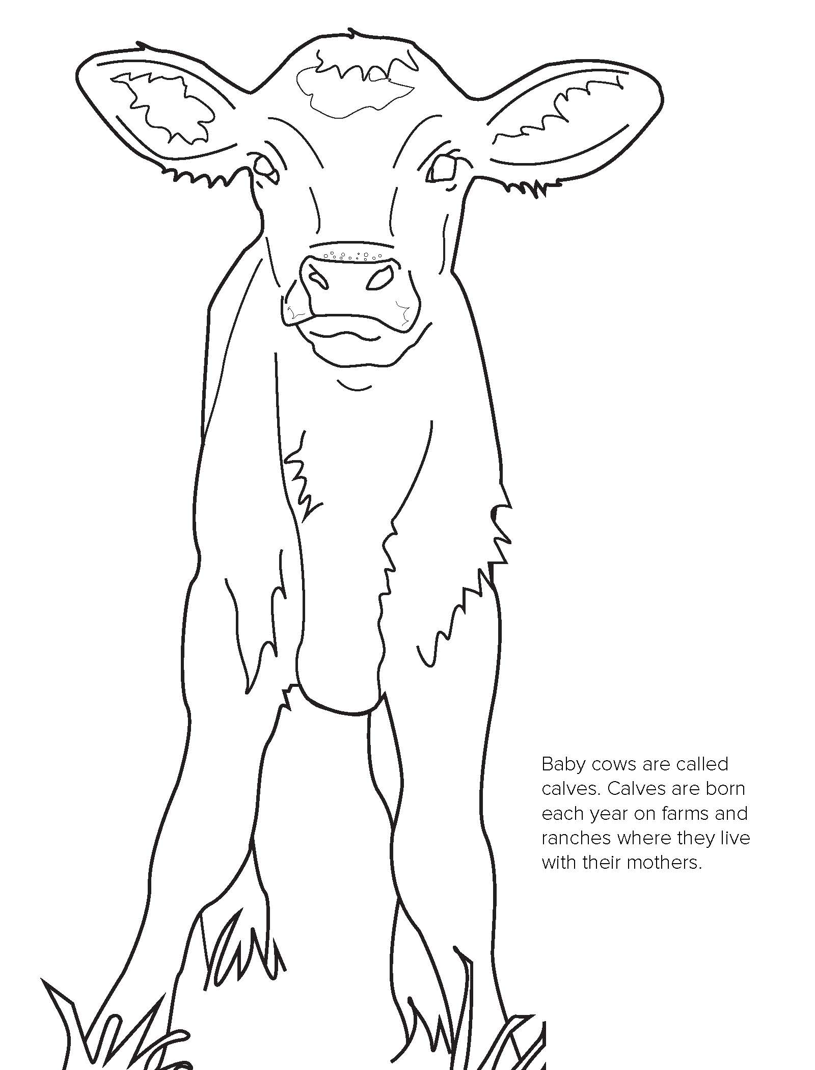 Beef Coloring Contest