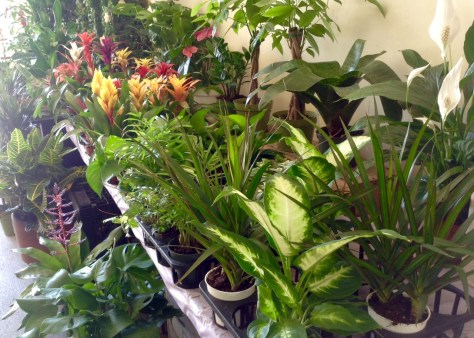 plant assortment