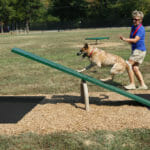 dog-teeter-totter