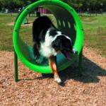 doggie-crawl