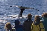 Whale Watching in Newport Landing, CA