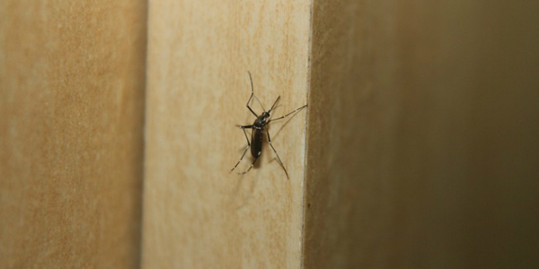 Dengue and your health insurance article