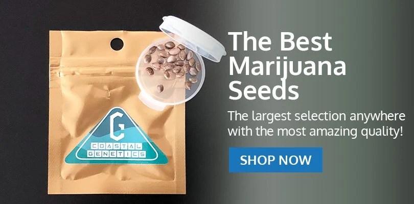 PSB-marijuana-seeds-toledo-2