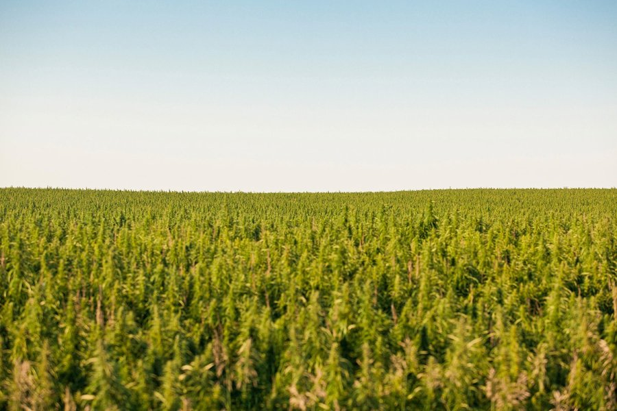 buy-cannabis-seeds-west-allis