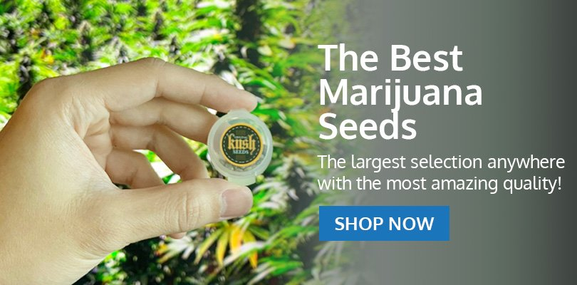 PSB-marijuana-seeds-oxnard-2