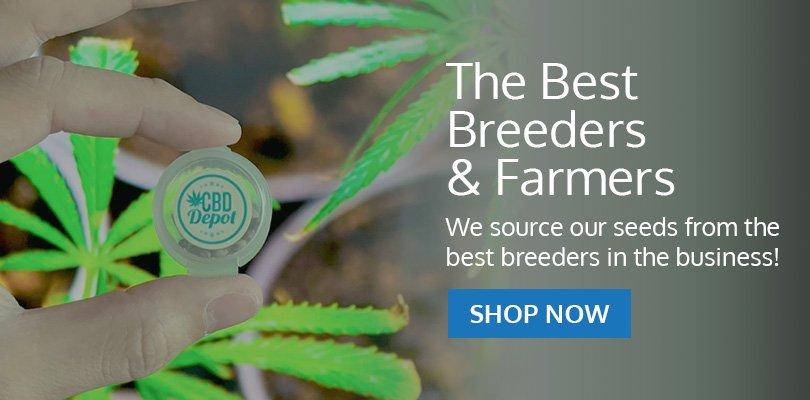 PSB-marijuana-seeds-taylor1