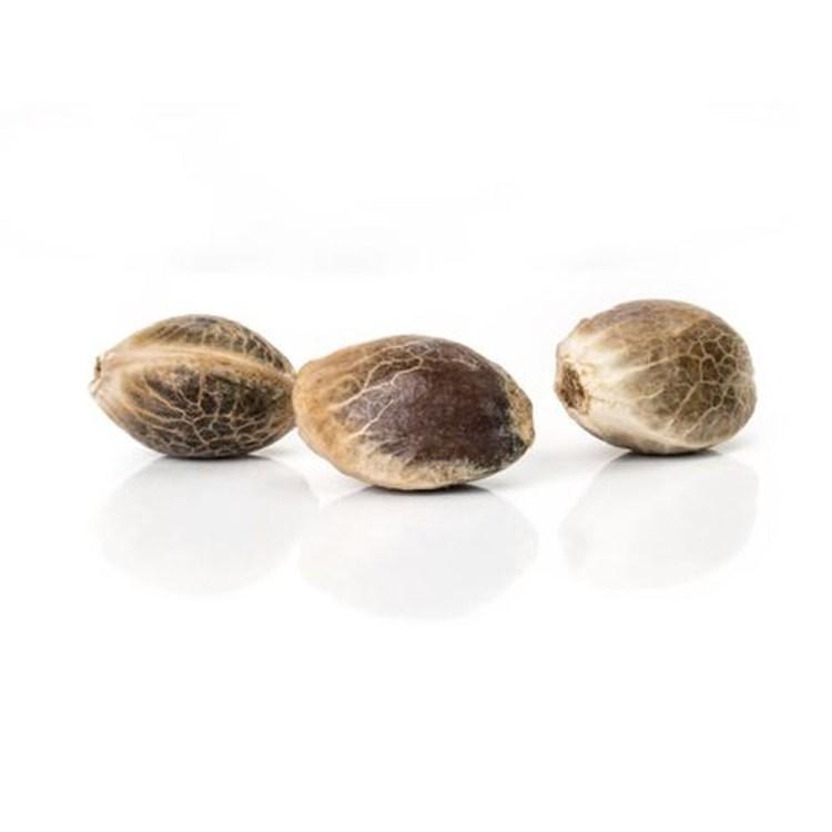 Cannabis-Aurora-Borealis-Autoflowering-Feminized-Marijuana-Seeds
