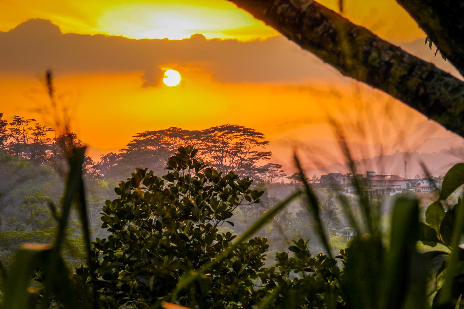 Stock: Kandy Sunset- Nick Stuckey-Beeri