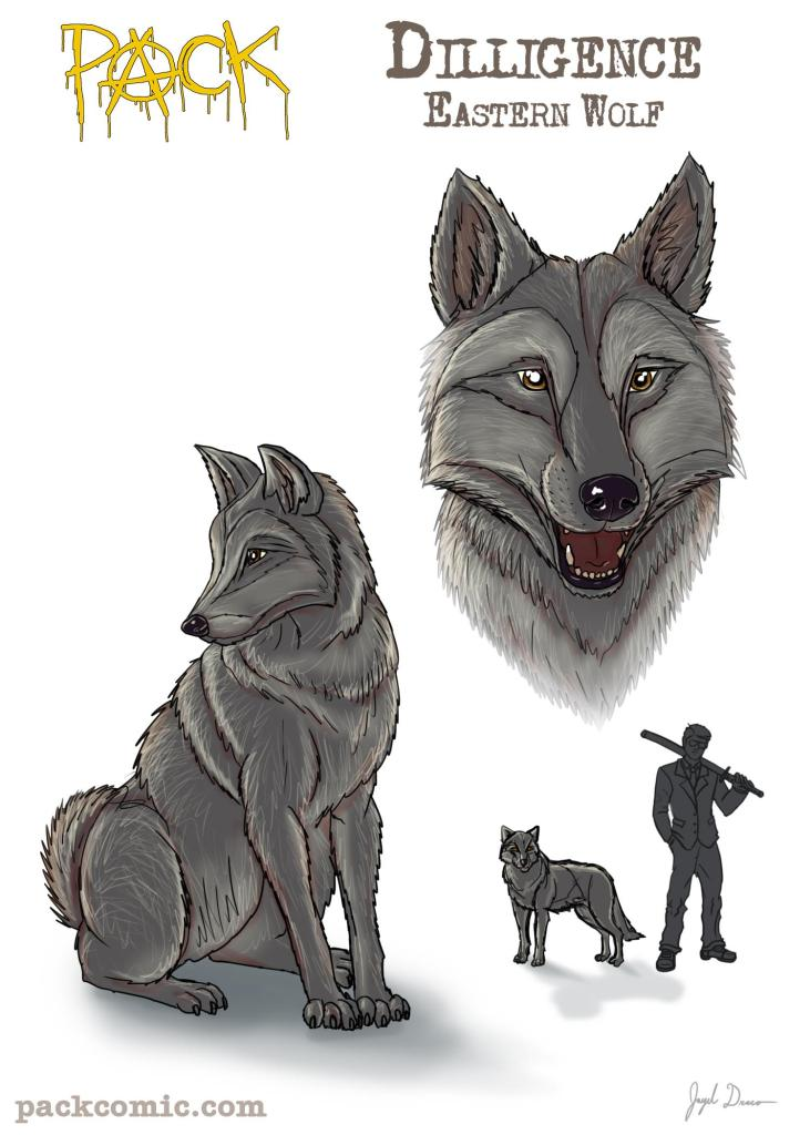 Bio Pic of Diligence, the eastern wolf