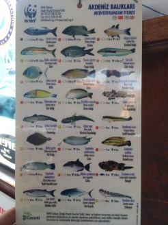 Marine Life Chart of Kaş