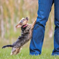 Stop Jumping! and Stay!  Pack of Paws Professional Dog ...