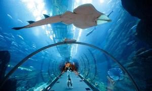 Dubai Aquarium | Groupon