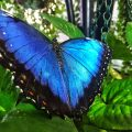 Dubai Butterfly Garden | Packs Light