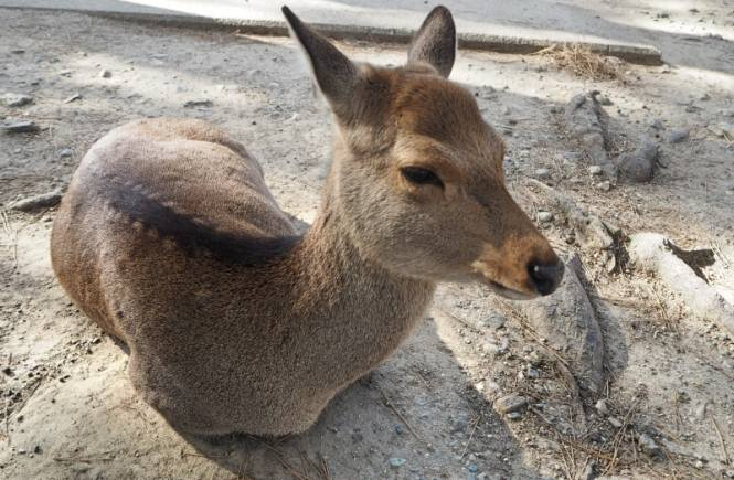 One day in Nara, Japan: home of the deer selfies | PACK THE SUITCASES