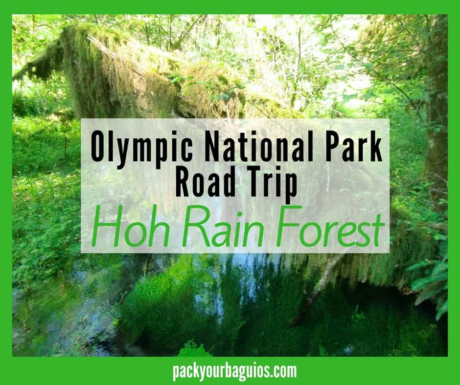 Olympic National Park: Hoh Rain Forest