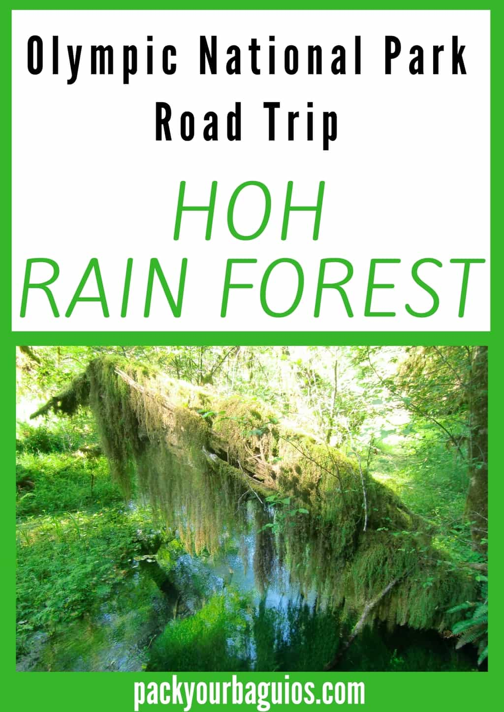 olympic national park road trip hoh rain forest pack your baguios. Black Bedroom Furniture Sets. Home Design Ideas