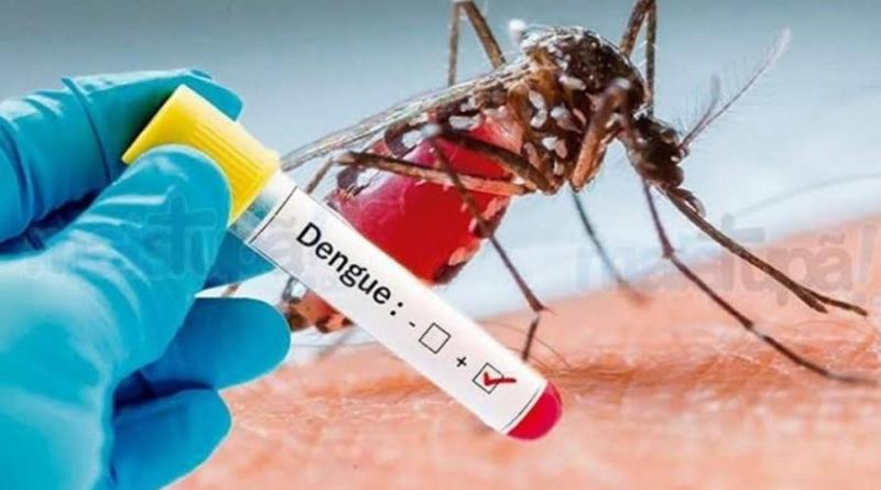 Dengue, grande parte da culpa é da população