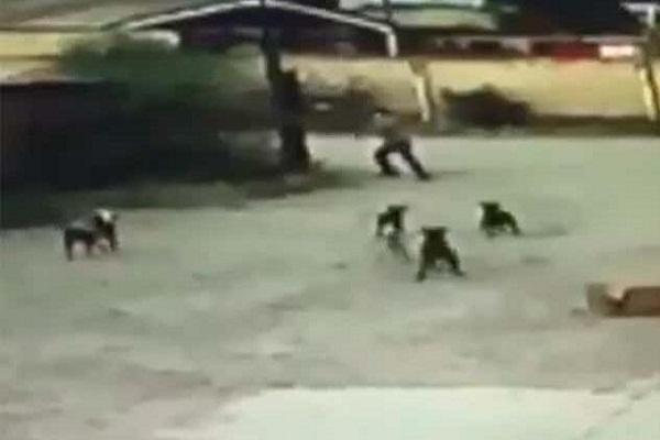 Así mató una jauría de perros a un hombre; animales fueron sacrificados