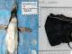 Encuentran pingüino muerto con cubrebocas atorado en su estómago