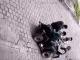 Seis agraden a hombres de la tercera edad en Metepec #VIDEO