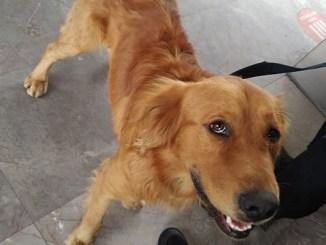 Rescatan perrito perdido en Metro de CDMX #VIDEO
