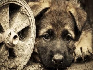 Brasil condenará hasta con 5 años de prisión a agresores de mascotas