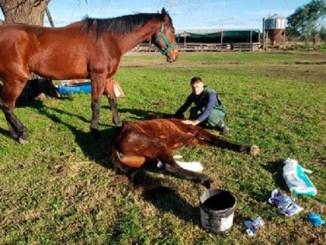 Atacan cruelmente a 30 caballos en Francia, los mutilan y les sacan los ojos