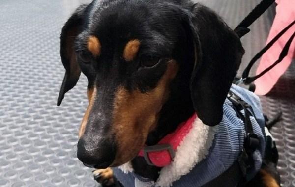 Roban refugio de perros en CDMX. Se llevan medicamentos, croquetas y golpean a los canes