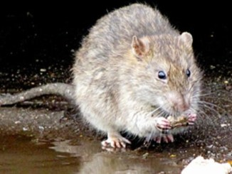 Joven de 16 años toma veneno para ratas y causa la muerte de su bebé tras pelea marital