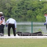 Un hombre muere en Tampico tras ser devorado por un cocodrilo mientras nadaba #VIDEO