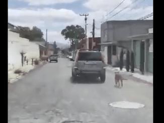 Denuncian maltrato a perrito en Hidalgo, lo arrastraban en un auto #VIDEO