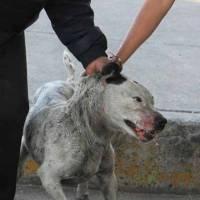 Investigarán violencia doméstica a partir de maltrato animal en CDMX