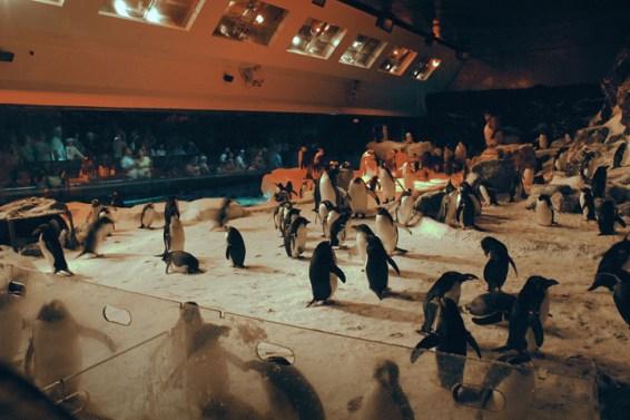Penguin15 lo-res