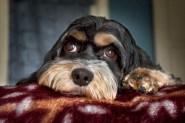 Dog-Sit03 06-27-11 lo-res