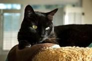 Cat-Sitting02 08-27-11 lo-res