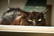 Cat-Sitting03 08-27-11 lo-res