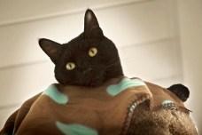 Cat-Sitting06 08-27-11 lo-res