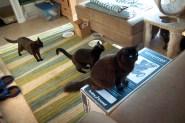 Cat-Sitting08 08-27-11 lo-res