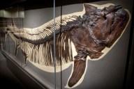"""Prehistoric """"Wolf Herring"""""""