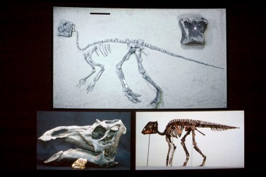 Infant skeletons