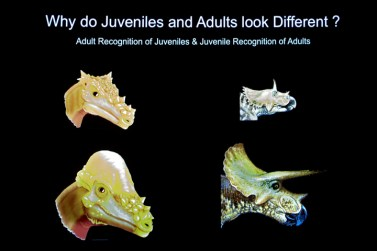 Skull differences