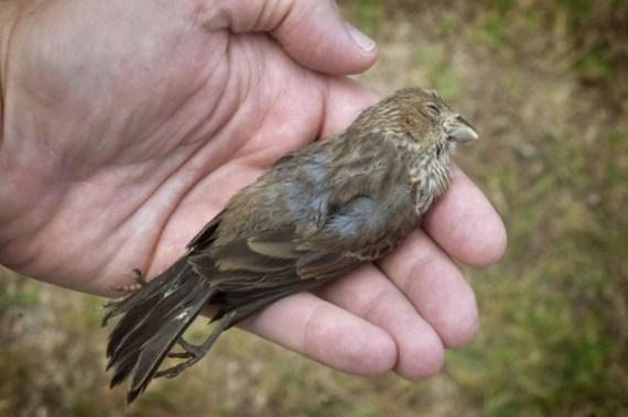 Bird Death 07-04-13 lo-res