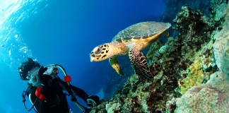 What is the best underwater video camera?
