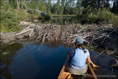 Beaver dam on the Kawishiwi River.