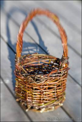 Weaving a willow basket by hand.