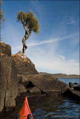 Kayak and the Grand Portage Witch Tree